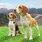 @anmar_beagle Profile picture