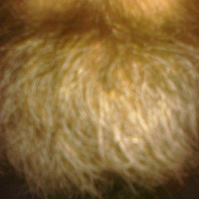 Beard 400x400