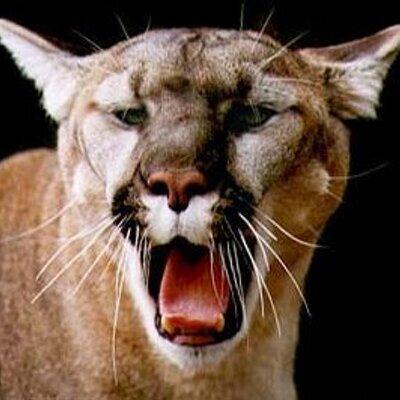 ann arbor cougars