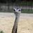 Jane Birdy twitter profile