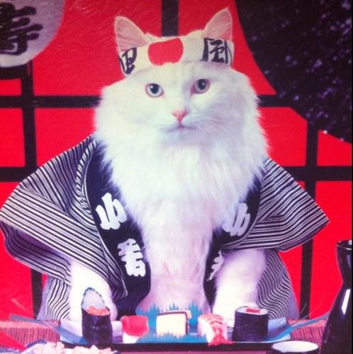 Sushi cat meowsushicat twitter