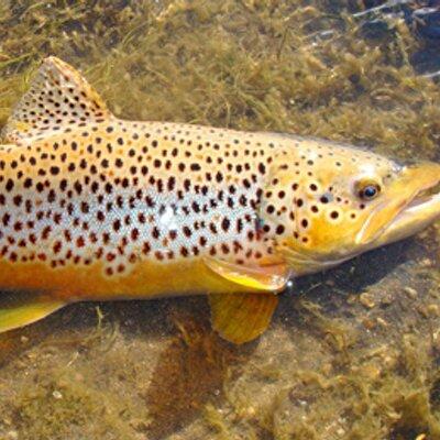 fly fishing online (@flyfishonline) | twitter, Fly Fishing Bait