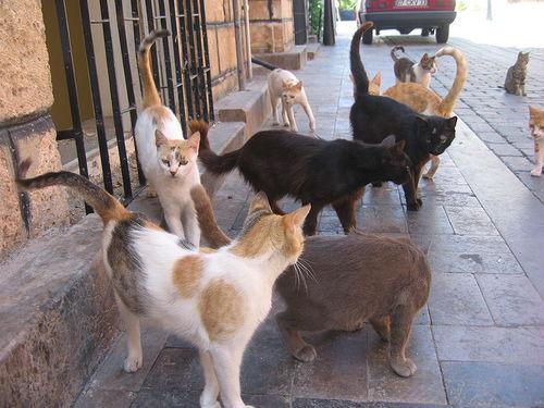 かわいい猫ブログ情報 Neko Ldblog Twitter