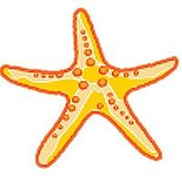 The Starfish ( @TheStarfish2 ) Twitter Profile