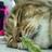 hibiscus_flower🌒 (@hibiscus_f)