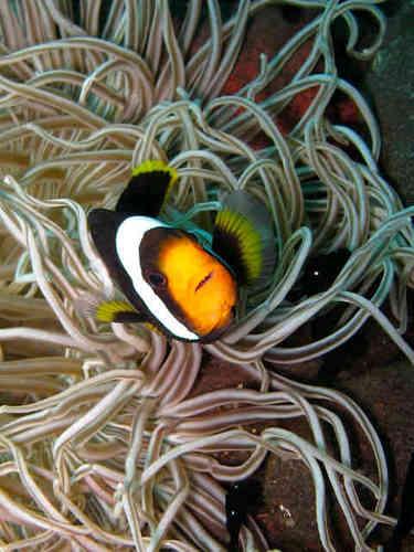 Anemone Dive Center Anemonedive Twitter