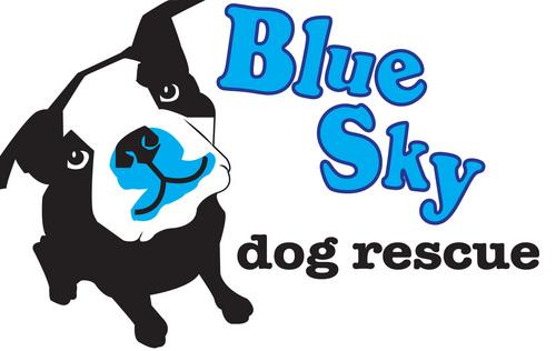 Dog Rescue Indonesia Volunteer