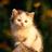 cat3888