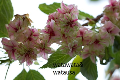 watawataのアイコン