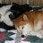 Just a Shiba Inu Dog