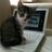 Kitty Bennet (@TheKittyBennet) Twitter profile photo