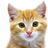 ICA_CAT