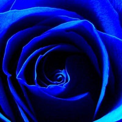 青い薔薇 (@Trans_Blue0630) | T...