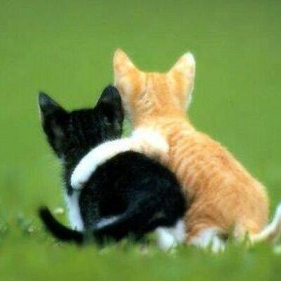 Freundschaft Chat