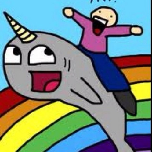 Awesome Narwhal Pictures Awesome Narwhal Narwhalfan
