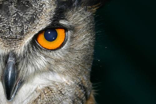 Citaten Over Uilen : Citaten en spreuken over uilen