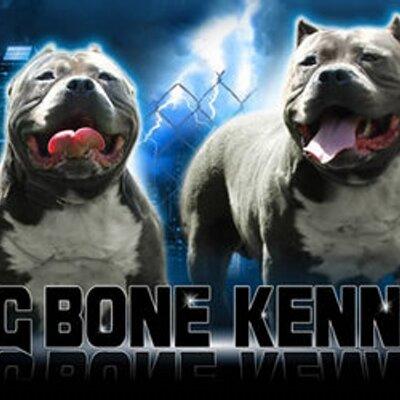 King Bone Kennels King Bone Kennels