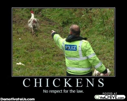 The Chicken Cops Chickencopsto Twitter