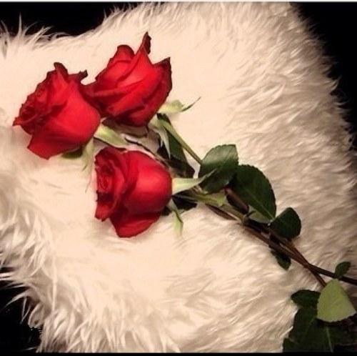 الزهور Image