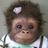 Monkeyduck