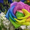رحيق الأزهار (@1390algohane) Twitter