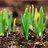Botanicum Seedlings