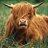 Talking Bullocks