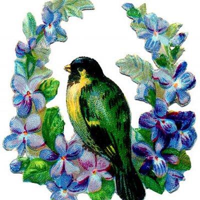 four letter birds (@fourletterbirds) | twitter