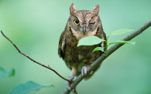 The Winking Owl (@WinkingOwl) | Twitter