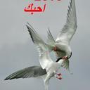 ابوياسر (@0564706053) Twitter