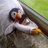 Penguin24