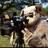 photogmike7's avatar