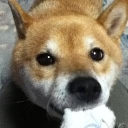yomeiri_kitsune