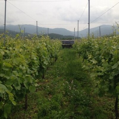 Hasumifarmwinery | Social Profile