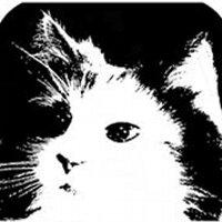 CatClayRoc