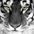 Hiddles Tigress