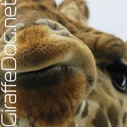 Giraffe dog - photo#15