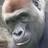 mara2n1's avatar'
