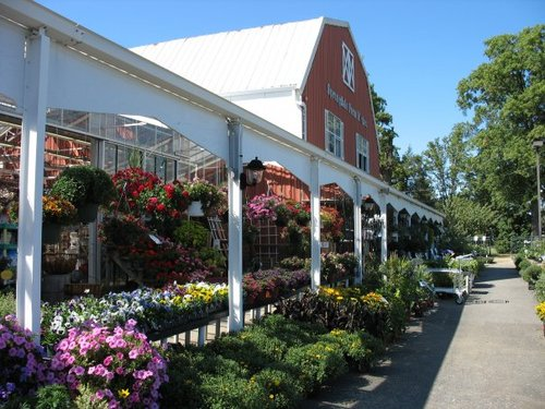 Springdale Farms Springdalefarms Twitter