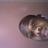 Photo de profile de Juda Peter Hlongwane