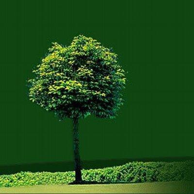 Carr vert carrevert twitter for Paysage vert
