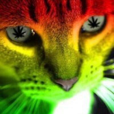 Unduh 93+  Gambar Kucing Rasta Terbaik Gratis