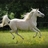 KB EquinePhotography