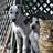 Cheryl cats dogsAUST