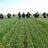 WANTFA_farming