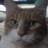 まー(生フェリア)'s Twitter avatar