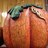 Pumpkin Patch SJ