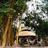 Tiger Camp
