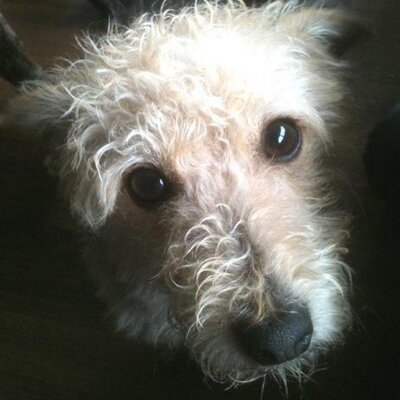 Islay Dog Rescue