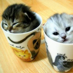 Katter Gis Bort